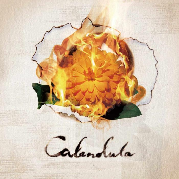 Album Calendula by a crowd of rebellion