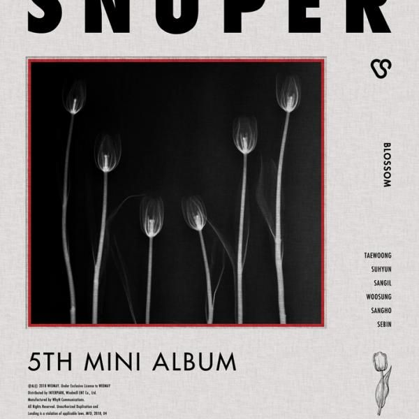 Tulips (튤립) by Snuper
